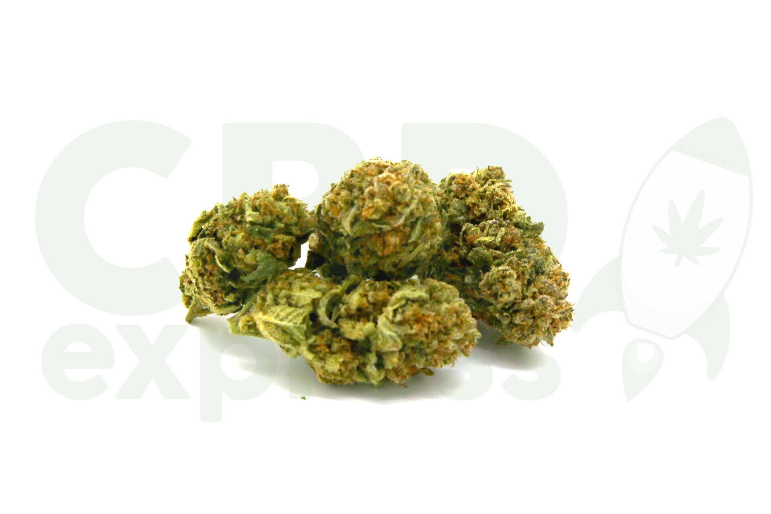 Cannabis Light: il volto legale di una pianta divina!